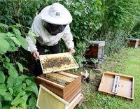 abeillesmiel.jpg